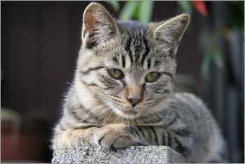 Cat0102066350